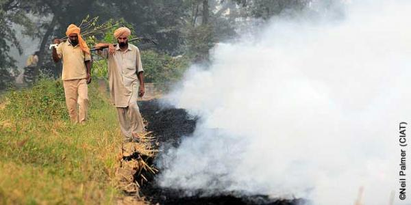 Understanding and reducing crop residue burning in North India