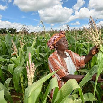 Subsidized seeds and fertilizer lead to higher agricultural yields and incomes