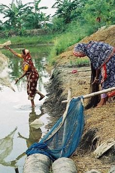 The impact of aquaculture on productivity, income, nutrition and women's empowerment: A call for evidence