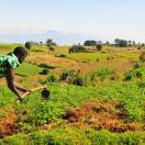 Call for proposals: Ugandan land policy reform